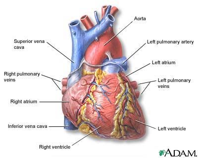 Do you know the difference cardiac arrest vs heart attack fit heartg ccuart Images