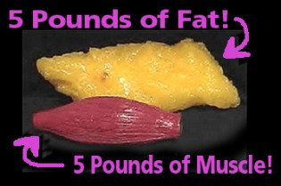 Carbohydrates lose weight permanently image 5