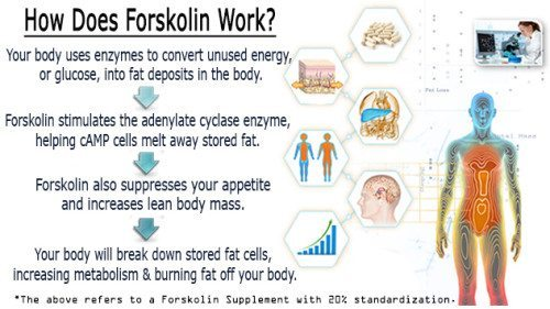 how does forskolin work