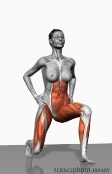 muscles working in lunge