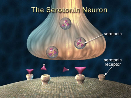 serotonin and fat loss