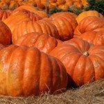 A Canned Food You SHOULD Eat, Pumpkin!