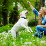 Tips To Keeping Your Dog Healthy, As Well As Yourself
