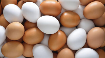 Egg Facts – Get Eggicated on Your Purchase